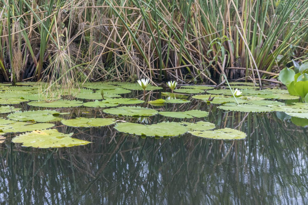 Pantanal-Marimbus-DSC_2014-b-kl