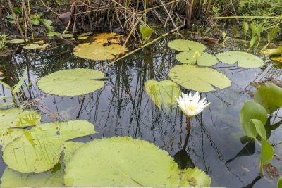 Pantanal-Marimbus-DSC_2029-b-kl