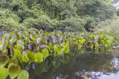 Pantanal-Marimbus-DSC_2033-b-kl