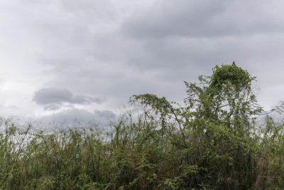 Pantanal-Marimbus-DSC_2036-b-kl