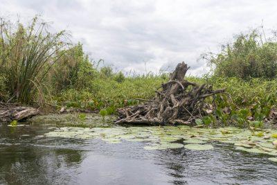 Pantanal-Marimbus-DSC_2039-b-kl