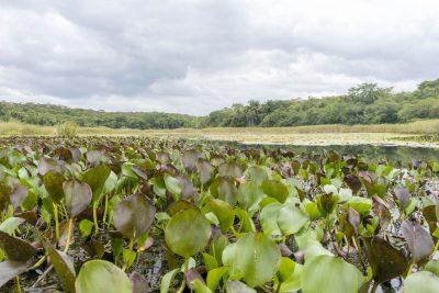 Pantanal-Marimbus-DSC_2044-b-kl
