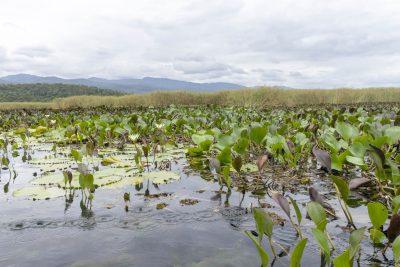Pantanal-Marimbus-DSC_2049-b-kl