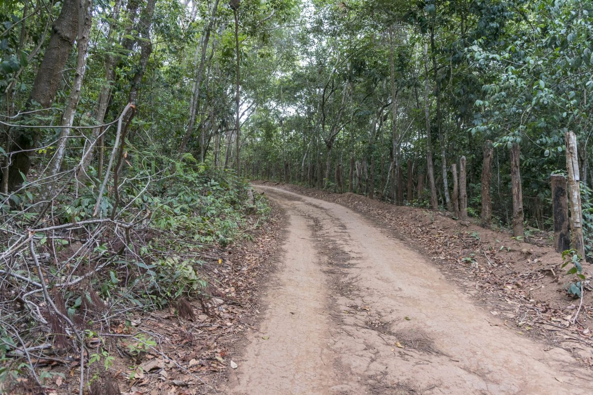 Pantanal-Marimbus-DSC_2057-b-kl