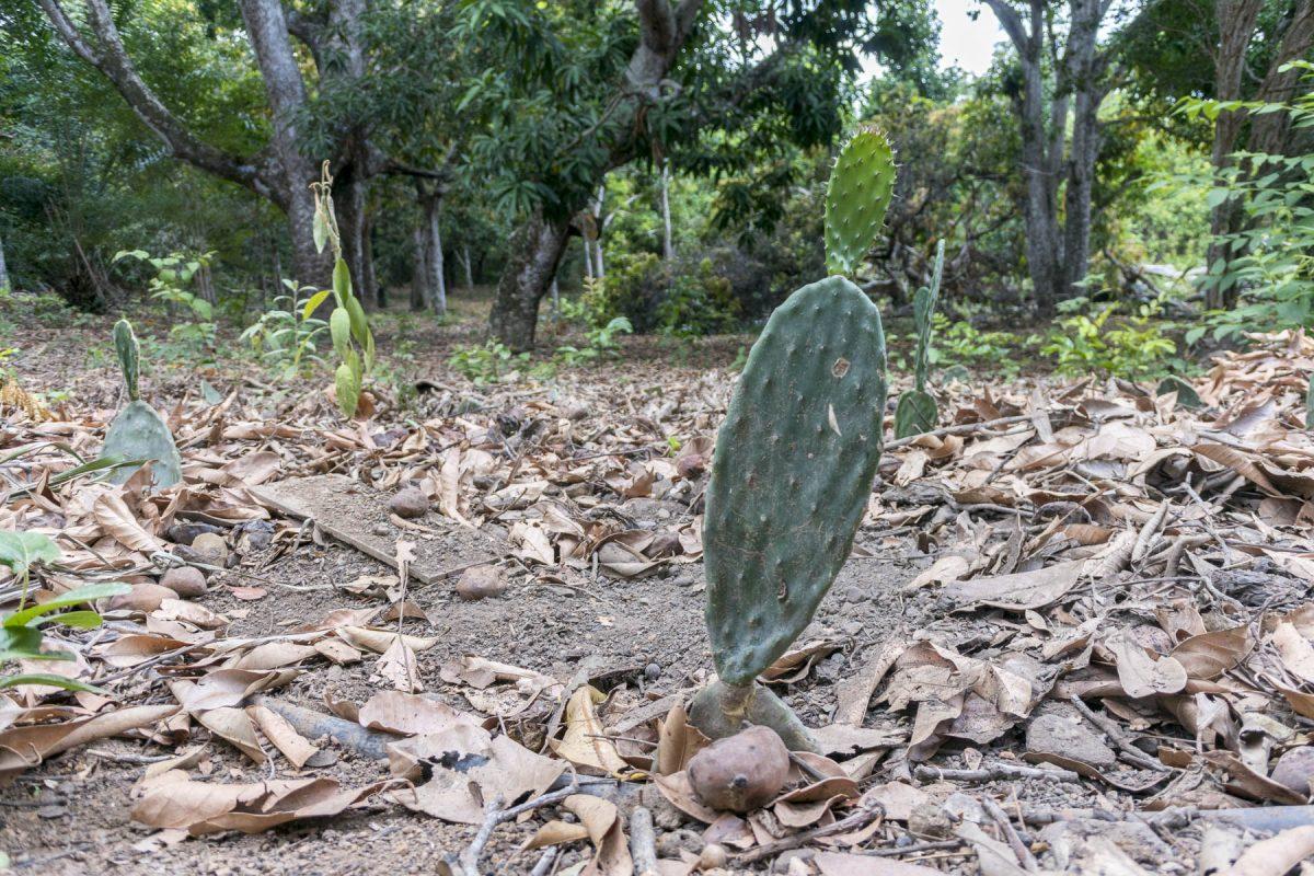 Pantanal-Marimbus-DSC_2072-b-kl