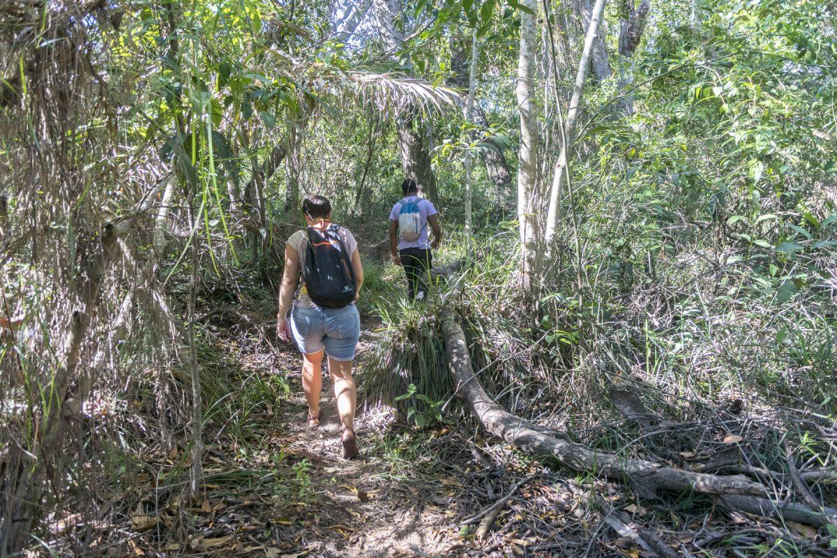 Pantanal-Marimbus-DSC_2099-b-kl