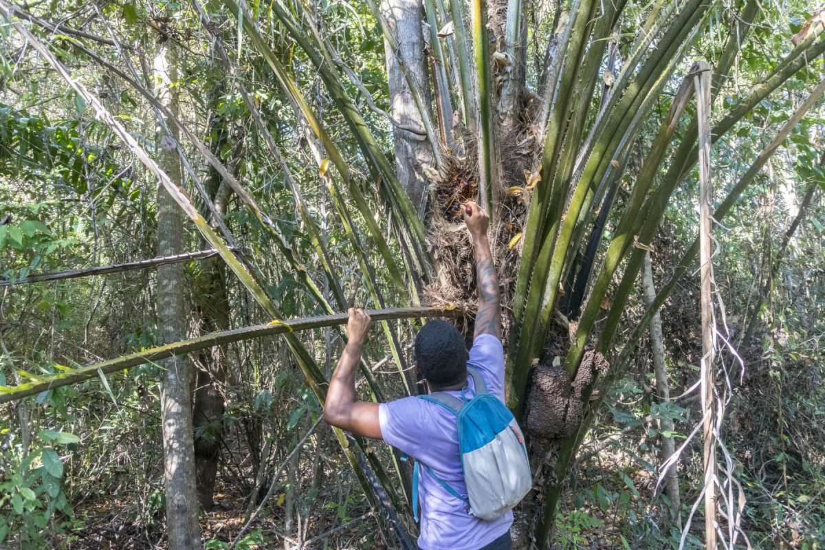 Pantanal-Marimbus-DSC_2102-b-kl