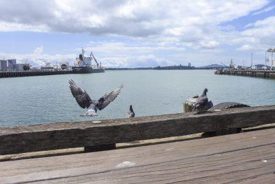 Auckland-DSC_2679-b-kl