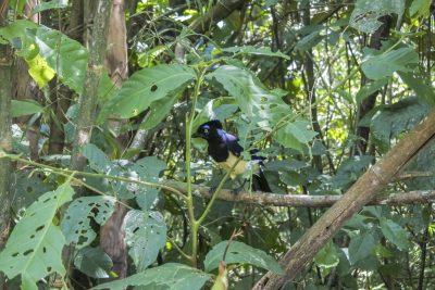 Ein lustiger Vogel :-)