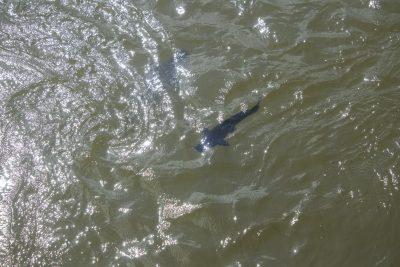 Ein grosser Fisch :O