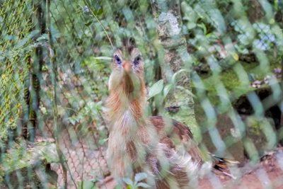 Iguacu-Guira-Oga-DSC_2470-b-kl