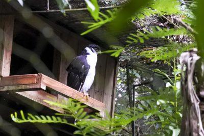 Iguacu-Guira-Oga-DSC_2476-b-kl