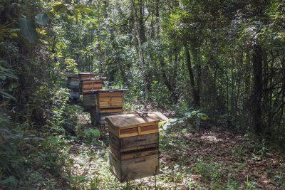 Bienen von Alessandro