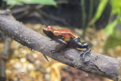 SaoPaulo-ZooDSCF5786-b-kl