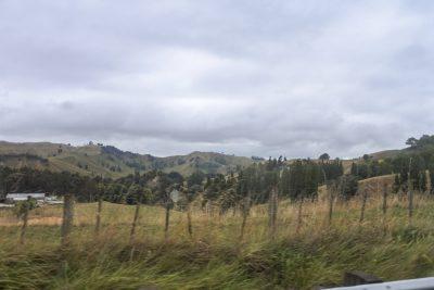 Wellington-DSC_2881-b-kl