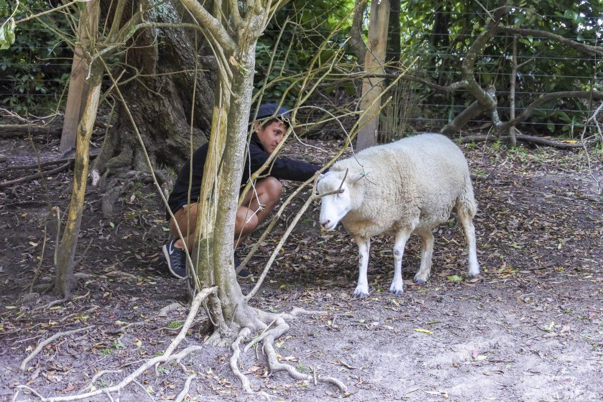 Michael streichelt ein Schaf