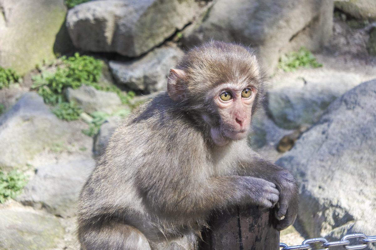 Beppu-DSC_6306-b-kl