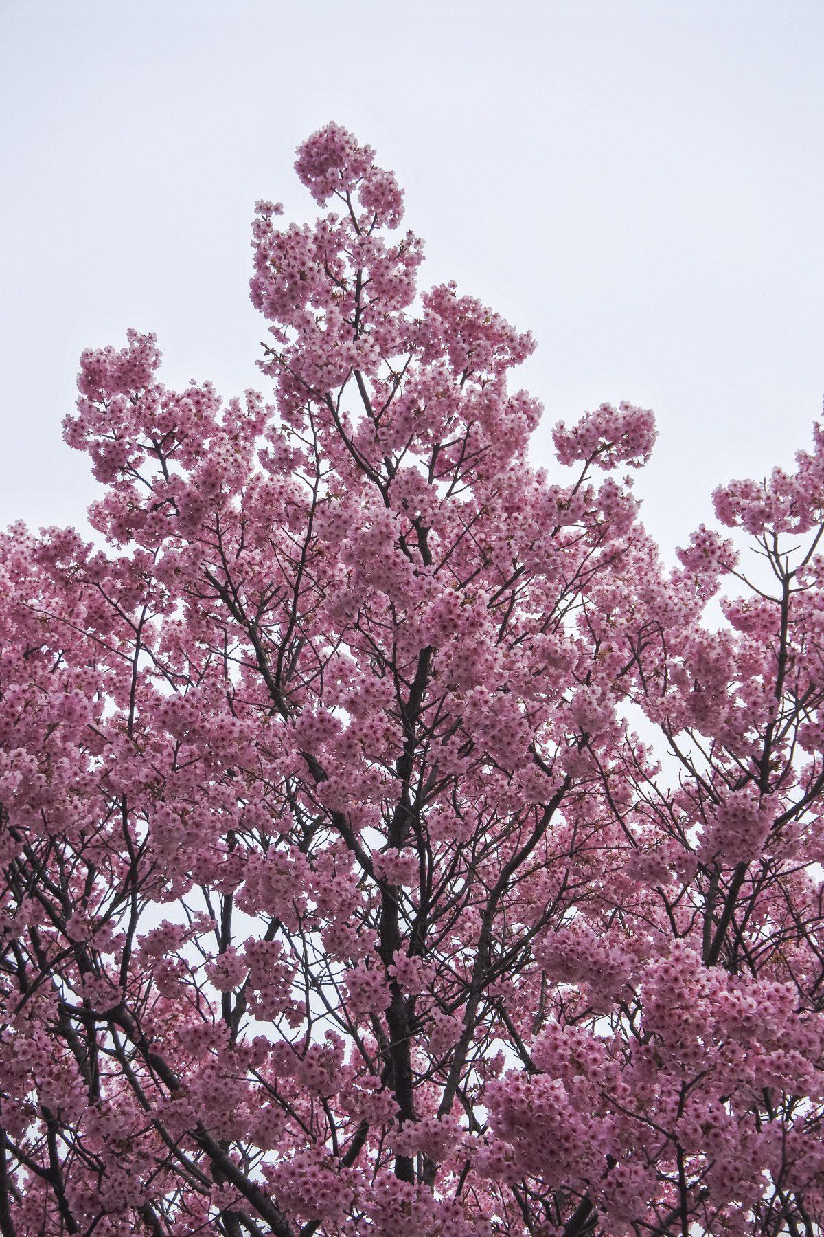 Onomichi-DSC_6469-b-kl
