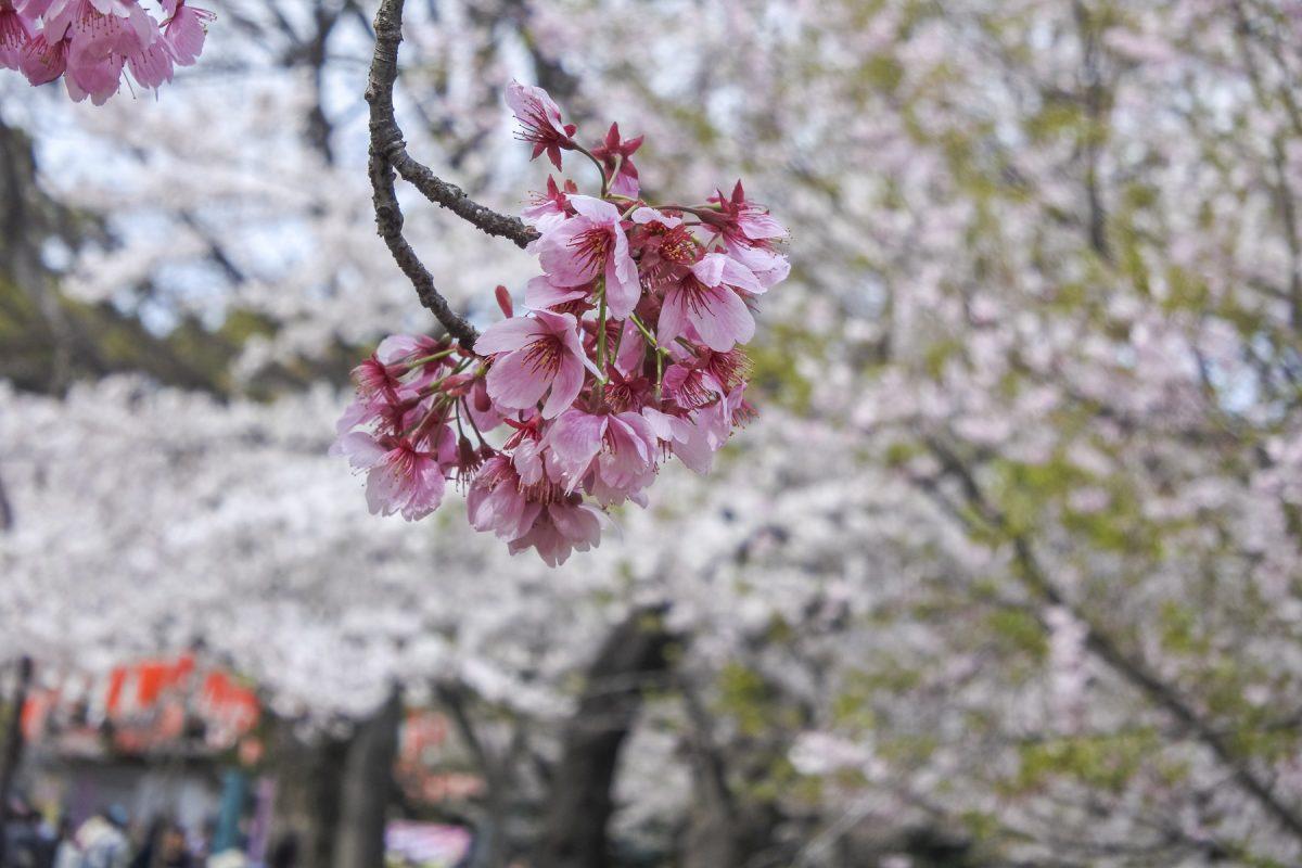 Tokyo-DSC_6926-b-kl_1