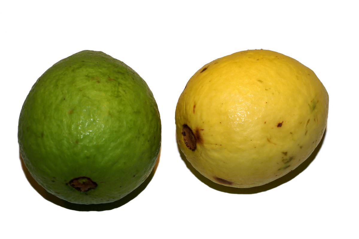 Psidium_guajava_(fruit)